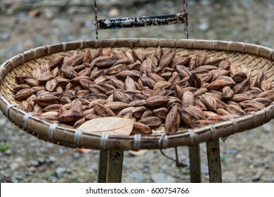 pili nuts drying on a bamboo tray in the Philippines