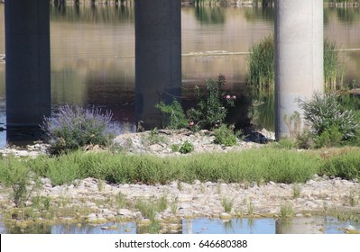 Pillars, water and flowers / Sanctuary