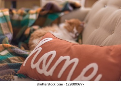 Pillow with the word home and orange kitty curled up in the blurred background - there's no place like home