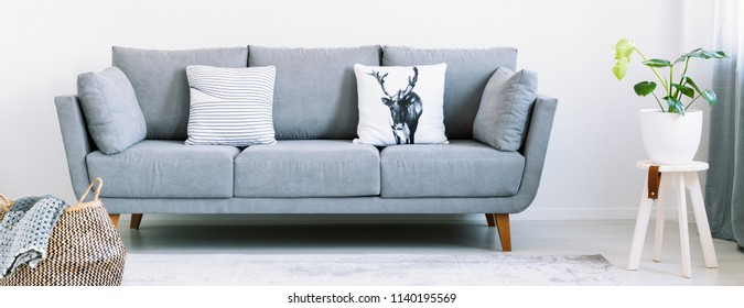 Pillows on a stylish gray sofa in a bright and modern living room interior with white walls and a plant on a stool