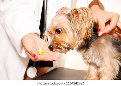 Pills / medicine for ill puppy
