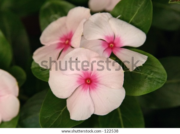 Pin and White Flower
