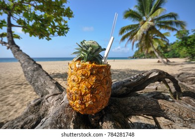 Pina colada served in pineapple set on palm tree at Dominican Republic beach.