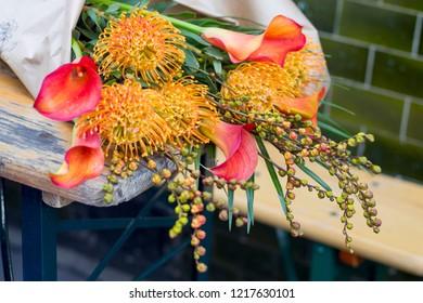 the Pincushion Proteas orange, Leucospermum cordifolium, South Africa