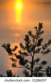 Pine against sun reflection in lake water
