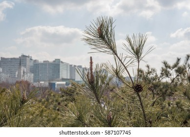 Pine and ApartmentsThe lake was photographed in the park.The pine tree and the artificial structure form the contrast between the apartments.We live in the heart of the city, but we need nature.