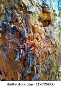 Pine bark (Pinus sylvestris)