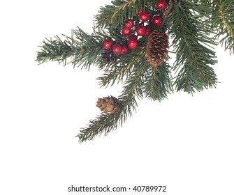 Pine branch with berries cones on white
