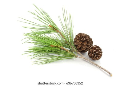 Pine branch and pine cones