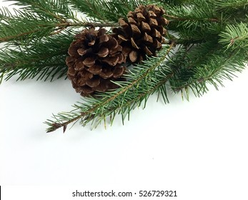 Pine branch and pine cones on a white background