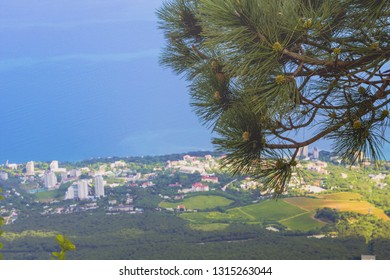 Pine branch in the foreground and the view from the height of the mountains on The black sea coast and urban village on the shore.