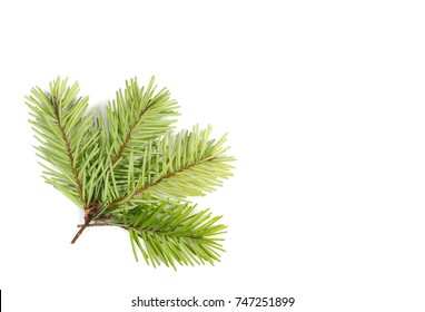Pine branch isolated on white background, top view