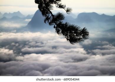 pine branch on mist mountain background