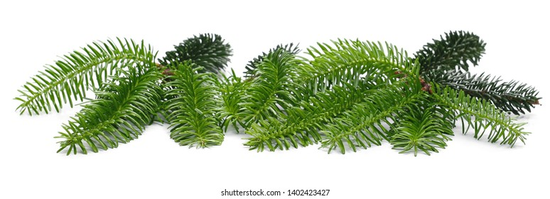 Pine branch, twig isolated on white background