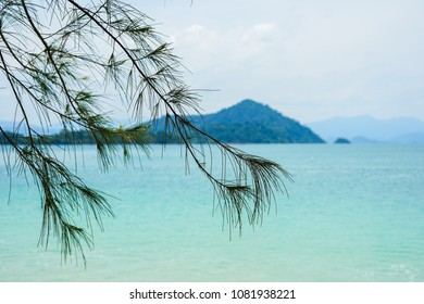 Pine branches by the sea in Laem Son beach, Ranong, Thailand
