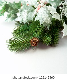 pine branches and pine cones on white background