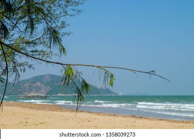 Pine branches extend to the beach. Overlooking the beautiful mountains and sea