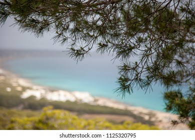 Pine branches in the foreground and a Mediterranean coastal landscape blurred in the background
