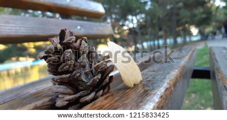 Pine Bumps Lie On Ground Autumn Stock Photo (Edit Now
