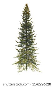 Pine Christmas tree on white background