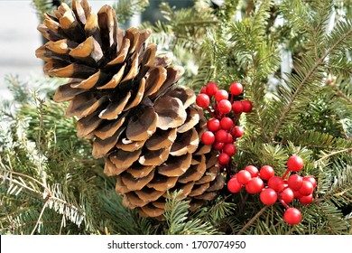 Pine cone and berries as decoration elements