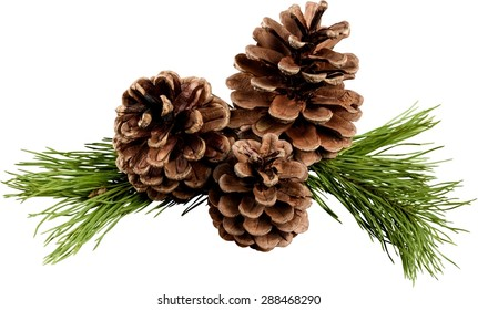 Pine, Pine Cone, Christmas Decoration.