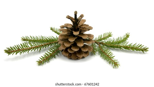 Pine Cone and fir branches. isolated on white