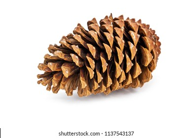 Pine Cone Isolated On White, close up of decoration for christmas