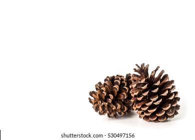 pine cone isolated on white background for Christmas decorative.