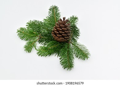 A pine cone and pine leaves, isolated on white background