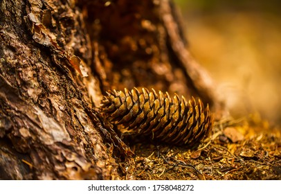 Pine cone macro view. Pine cone close up. Pine cone in forest. Pine cone - Shutterstock ID 1758048272
