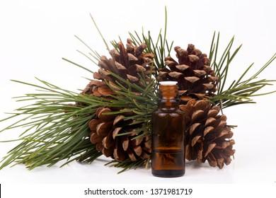 Pine cone oil