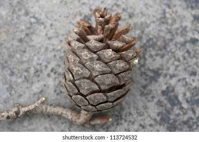 Pine Cone on Grey Stone