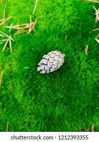 pine cone on moss