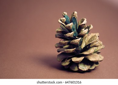 Pine cone on a red background.