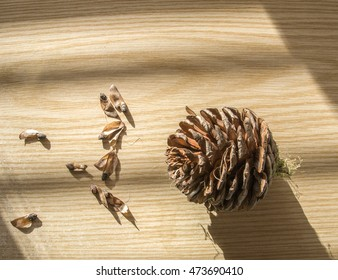 Pine cone on a tabletop