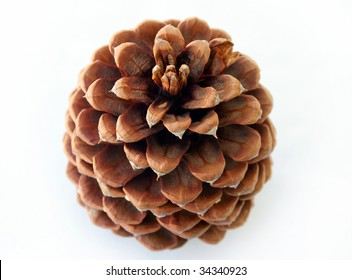Pine cone on white.