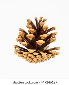 A pine cone on a white background