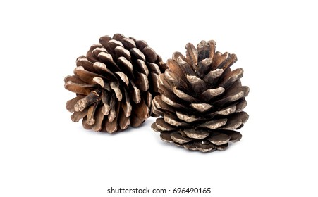 Pine cone on white background - Shutterstock ID 696490165