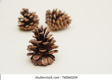 Pine cone on white background. Cristmas or Winter Concept