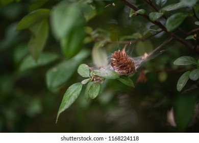 pine cone stuck in a spider web