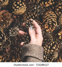 pine cone in woman hand for christmas diy present or decoration