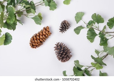 Pine Cones with Branches Flat Lay Top View