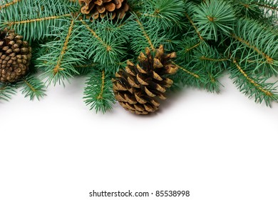 Pine cones and fir-tree on white,close-up