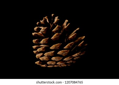 Pine cones isolated on black background.
