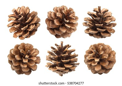 Pine cones isolated on a white background, with clipping path