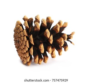 Pine cones isolated on white