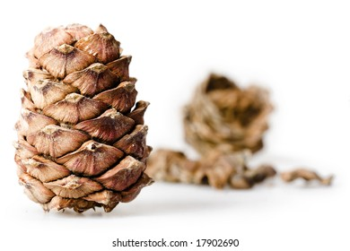 Pine Cones, New Year background