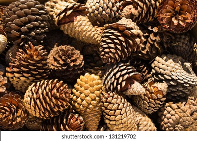 Pine Cones nice and dry and some are open up.