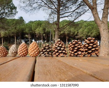pine cones in order on the wooden table in the forest for special day concept .